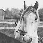 Pale Horse by PHLBike