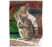 Squirrel Requesting More, Poster