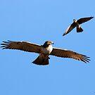 Kestrel and Hawk by Dennis Cheeseman