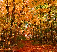 Heavenly Pathway by Docharmony