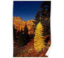 Glowing Tree at Night Poster