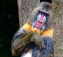 Monkey Business   by John44