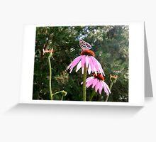 Summer Echinacea Greeting Card