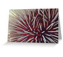 Urchin Close-Up Greeting Card