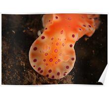 Orange Nudi Poster
