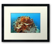 Plate Coral Framed Print