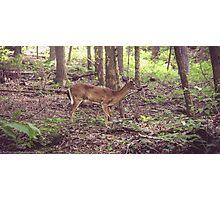Bambi Photographic Print
