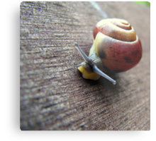 Snail on the gardenseat Metal Print