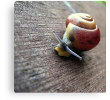 Snail on the gardenseat Canvas Print