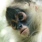 Pensive Young Spider Monkey by Margaret Saheed