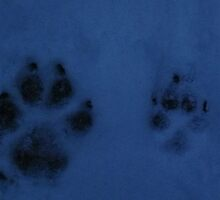 Swag and Gabriels paw prints ... soo cute !!   by Naylor