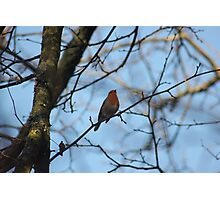 Winter Song Photographic Print