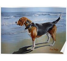 Beagle Sea View Poster