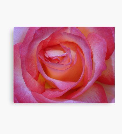 Bright Pink Rose Canvas Print