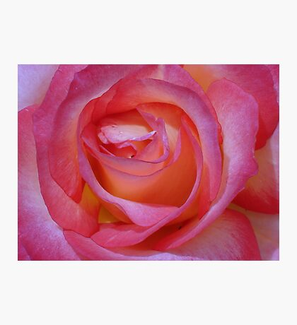 Bright Pink Rose Photographic Print