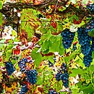 Blue Grapes by globeboater
