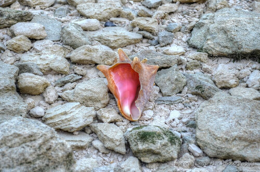 Lonely Conch on The Shore in Nassau, The Bahamas by Jeremy Lavender Photography