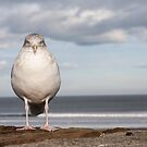 The Seagull by Cvail73