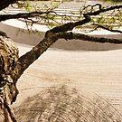 Ginkaku-ji Garden by Skye Hohmann