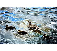 Mother Duck and Ducklings Photographic Print