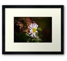 Chrysanthemum Framed Print