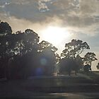 On the road to Bega #5 by Tom McDonnell