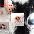 Are These Ticks? - No, Not botfly larve either - But Conact Allergy, Turned Dog Scabs, Turned Infected! by tmac