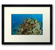 Underwater photography of a shoal of fish swimming  Framed Print
