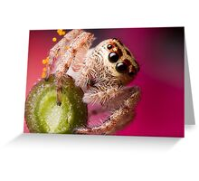(Servaea vestita) Jumping Spider On Flower Greeting Card