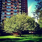 Single Green Tree and Sunlight in New York City by SylviaS