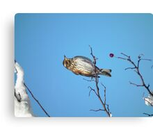 A Song for Winter Canvas Print
