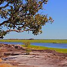 The magic of Arnhem land - Coolibah tree by georgieboy98