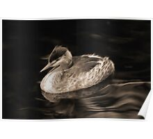 """Great Crested Grebe"" Poster"