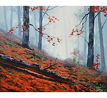 Forest Floor Photographic Print