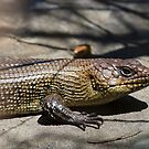 Cunningham's Skink by Will Hore-Lacy