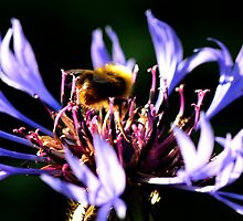 Bumbling by Richard Ion