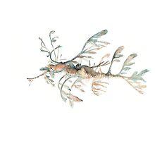 Seadragon Photographic Print