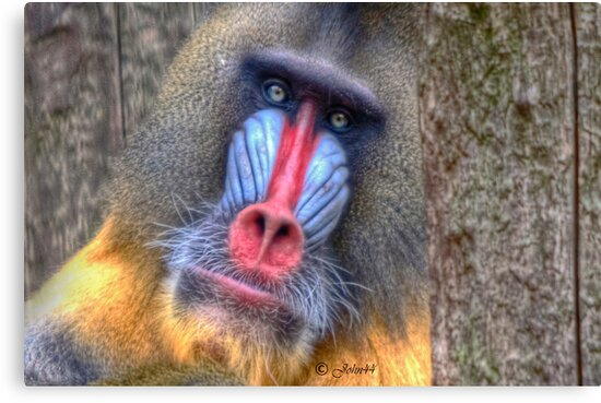 Monkey Business II (on request..see discription) by John44