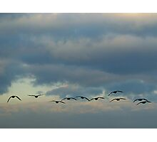Flying Silhouettes Photographic Print