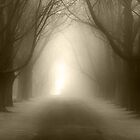 Path by Steven Gibson