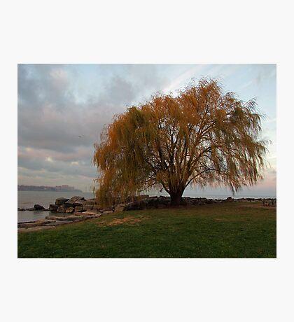 My Favorite Tree Photographic Print