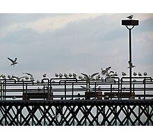 Seagull Landing Photographic Print