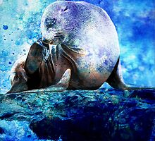 SEAL by Tammera
