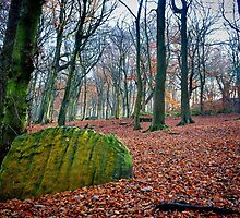 Chevin Forest Park #1 by Colin Metcalf