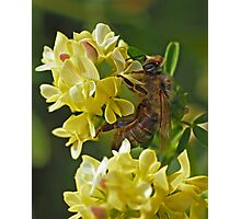 Alfalfa Worker Photographic Print