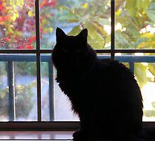 Pooh Bear In The Window by heatherfriedman