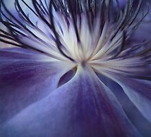 Clematis in Blue Moon Light by Lena Weiss