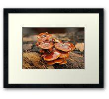 Mushrooms2 Framed Print