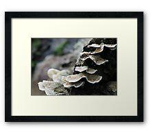 Mushrooms3 Framed Print