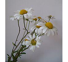 Wistful White Daisies Photographic Print